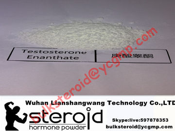 চীন Healthy Anabolic Seroid White Powder Testosterone Enanthate for Bodybuilding 315-37-7 পরিবেশক